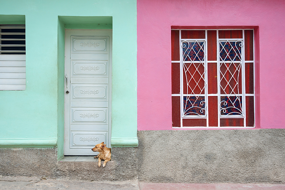 Dog lounging outside a colorful house in Trinidad, Cuba
