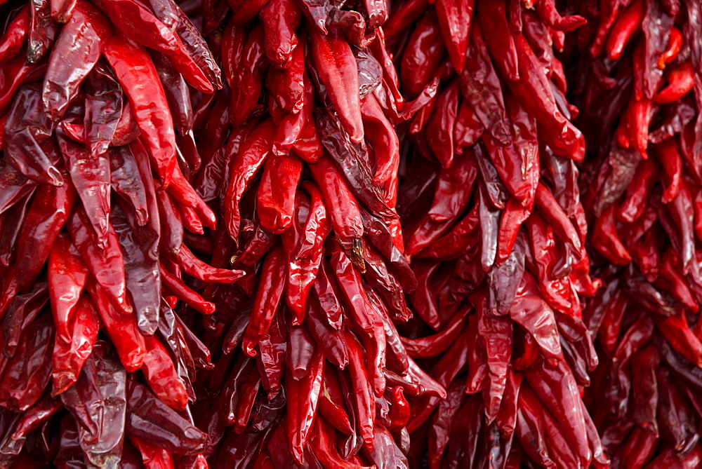 Hanging bunches of dried chili peppers for sale in Santa Fe, New Mexico, United States of America, North America - 1315-121