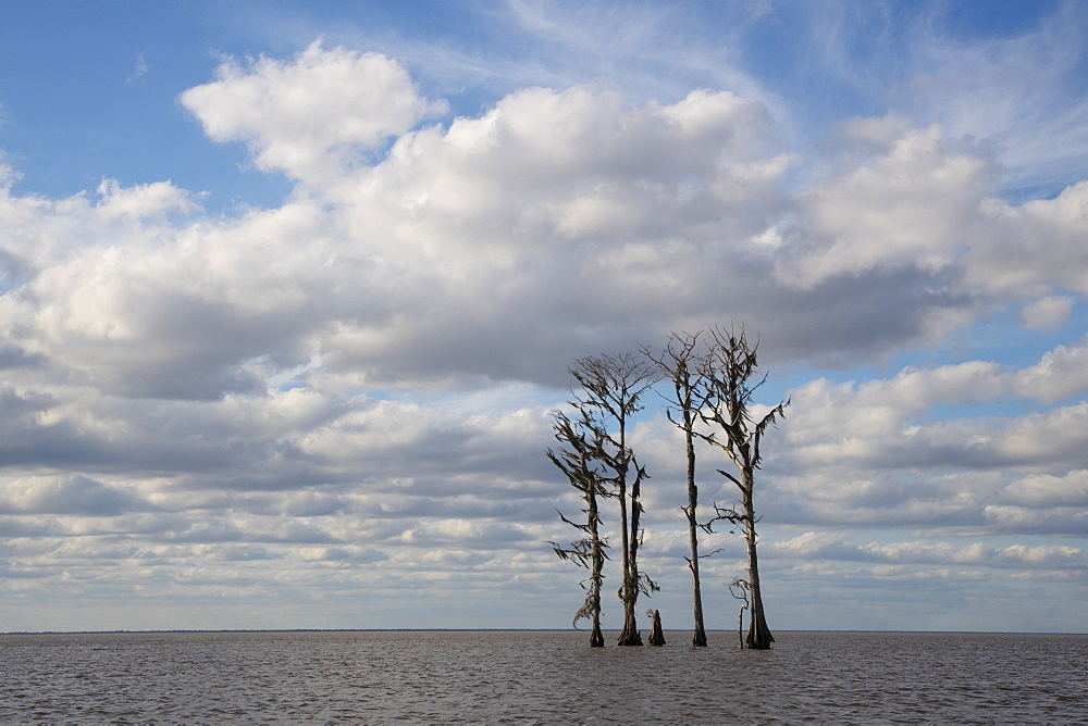 Swamp trees silhouetted against the blue sky near New Orleans.