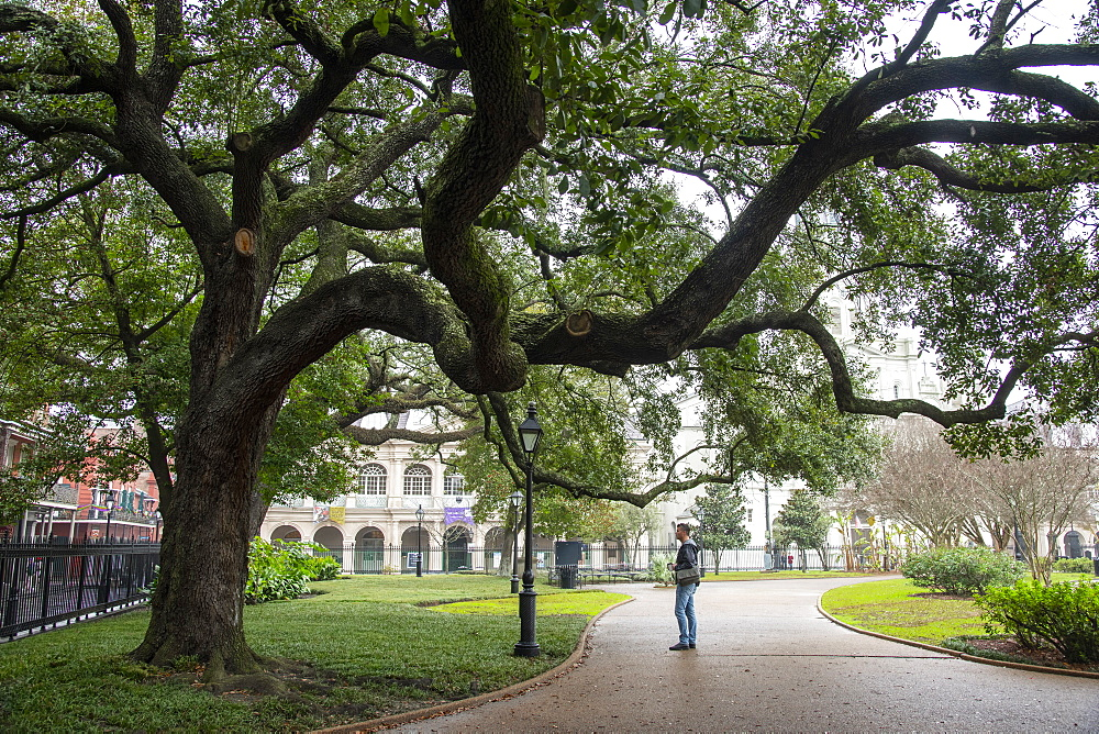 Strolling under the branches of a dramatic old oak tree in Jackson Square, New Orleans, Louisiana, United States of America, North America
