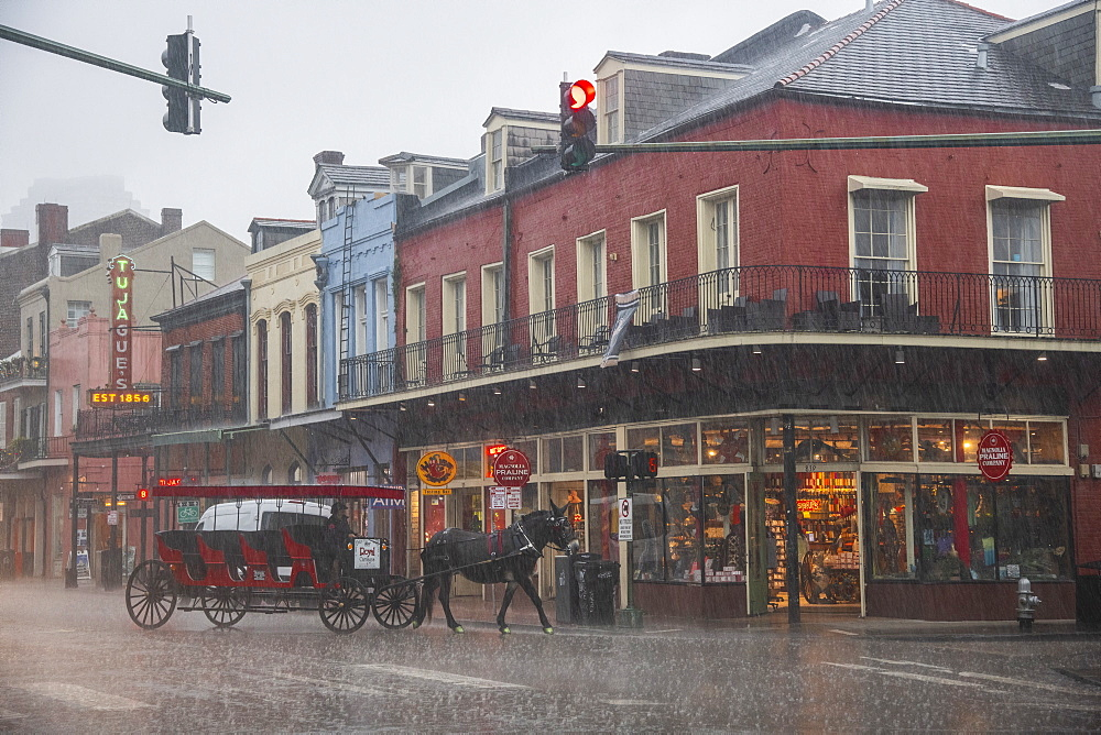 A horse dashes along the street trying to escape a sudden downpour during a storm in New Orleans. French Quarter, New Orleans, Louisiana, United States of America, North America