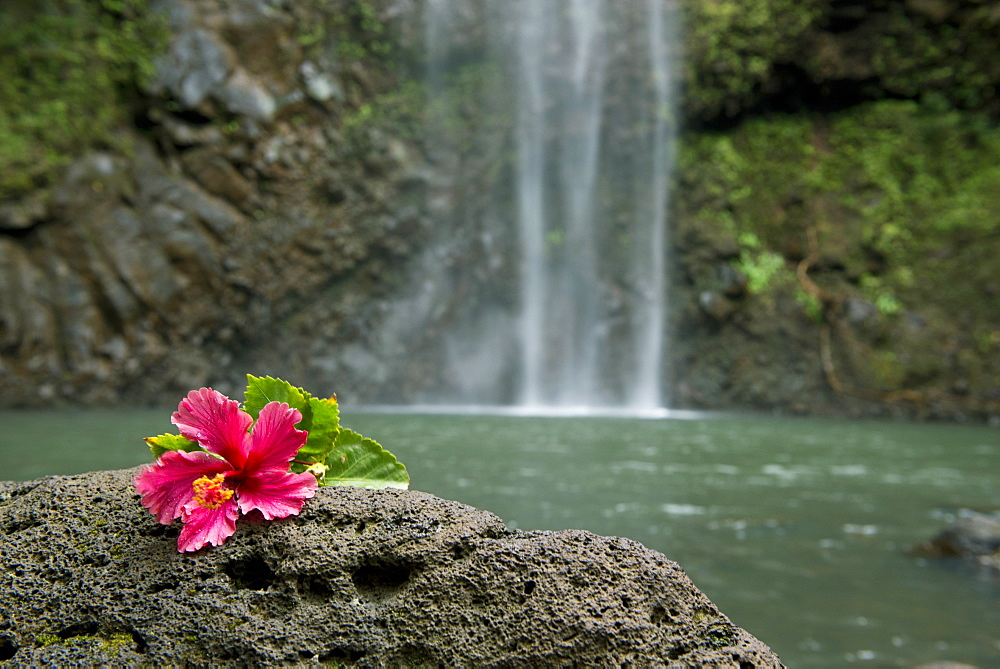 Flower on a rock in front of Uluwehi Falls, Kauai