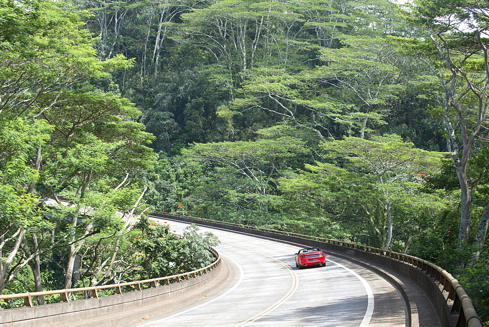 Elevated road through a forest, Kauai, Hawaii, United States of America, North America