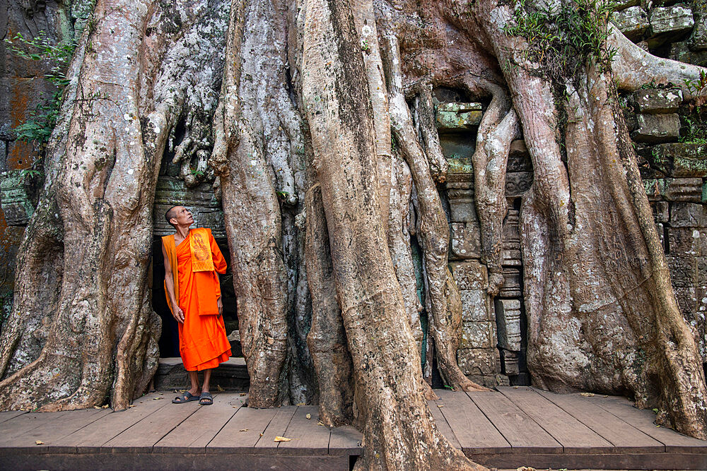 A Buddhist monk gazes up at the roots of a Banyan tree at the Angkor archaeological complex, UNESCO World Heritage Site, Siem Reap, Cambodia, Indochina, Southeast Asia, Asia