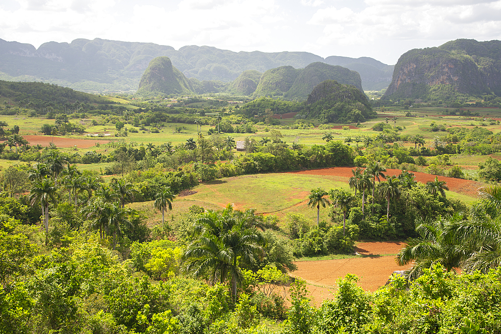 View of the beautiful valley of Vinales, UNESCO World Heritage Site, Cuba, West Indies, Caribbean, Central America - 1315-77