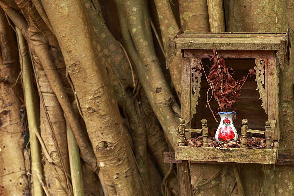 A wooden tree shrine on a Banyan tree, containing a ceramic vase and a bunch of twigs, Yangon (Rangoon), Myanmar (Burma), Asia - 1317-11