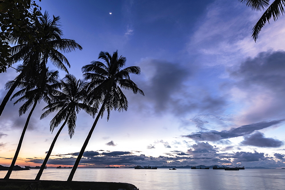 Palm trees by Sittwe harbour before sunrise, with clouds and small moon in the dawn sky, Sittwe, Myanmar (Burma), Asia