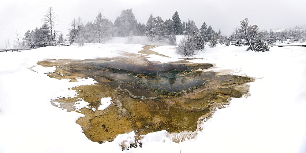 Hot Springs on a hill of travertine covered in snow, Mammoth Hot Springs, Yellowstone National Park, Wyoming, United States of America, North America