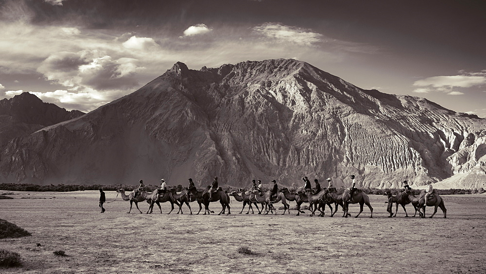Tourists enjoying camel ride in the Nubra Valley in Ladakh region of India, Ladakh, India, Asia