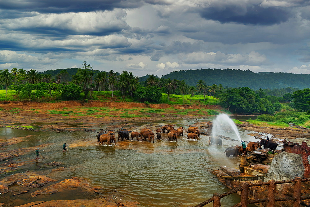 Elephants enjoying the bath at Pinnawala Elephant Orphanage, Colombo, Sri Lanka, Asia - 1319-3