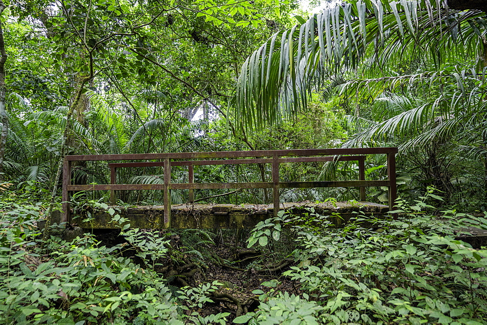 An old wooden bridge located in the forest of the Soberania National Park, Panama, Central America