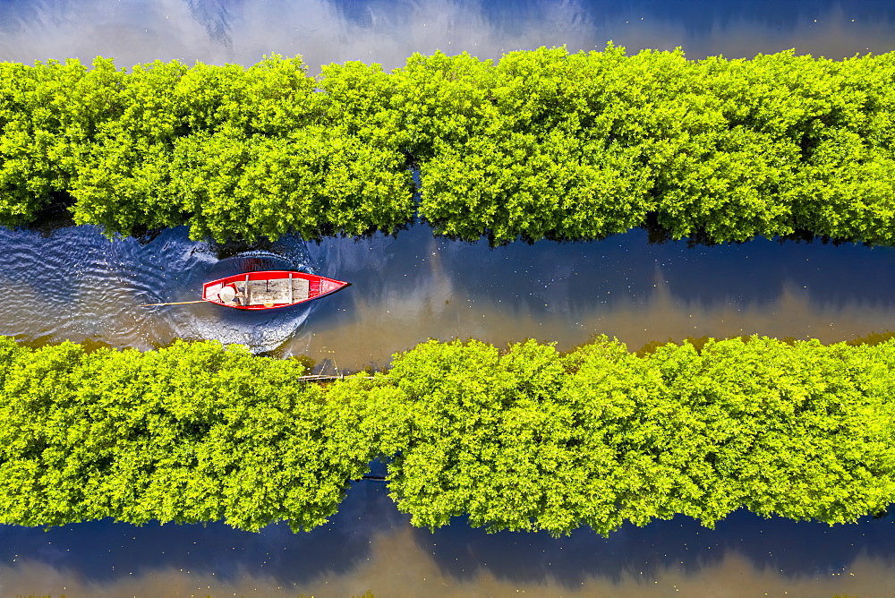 In the middle of mangroves forest, Quang Ngai, Vietnam, Indochina, Southeast Asia, Asia - 1321-2