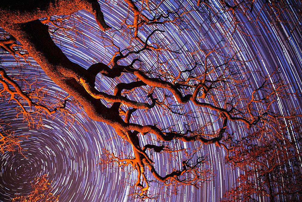 Startrail with tree in silhouette in foreground, Khama Rhino Sanctuary, Botswana, Africa
