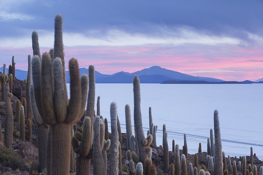 Isla del Pescado sunset with cacti and dramatic sky, Potosi, Bolivia, South America