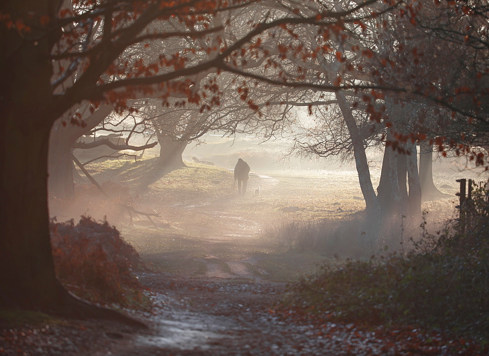An old man walks his dog one winter's morning in a misty Richmond park.