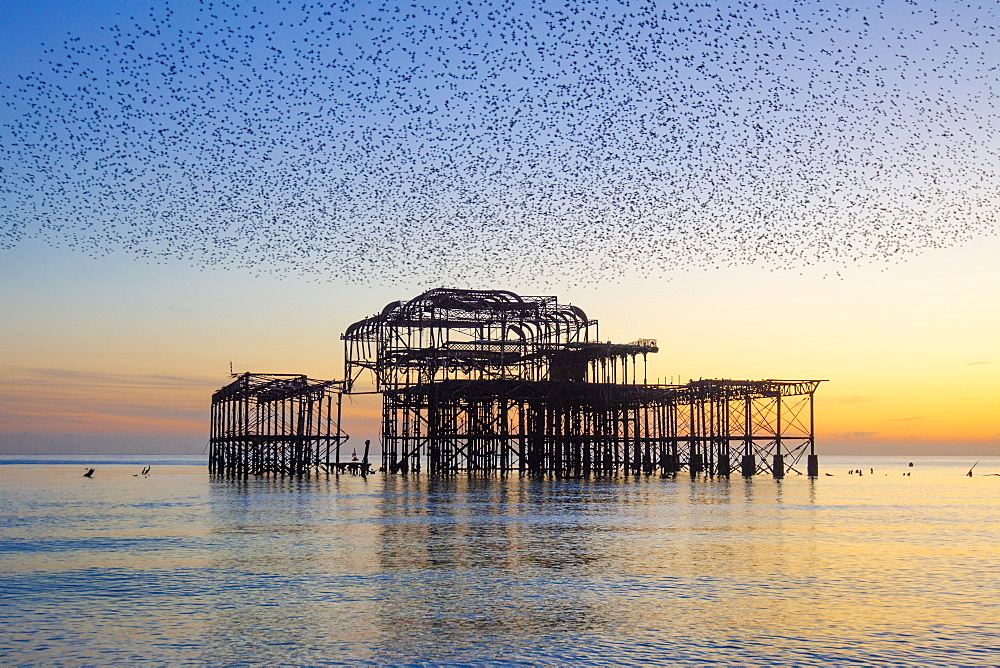 Starling murmuration over The West Pier at sunset, Brighton, Sussex, England, United Kingdom, Europe