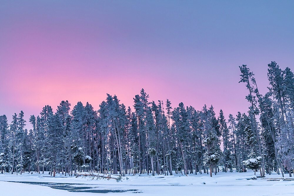 Morning light over snow covered trees, Yellowstone National Park, Wyoming, United States - 1335-110