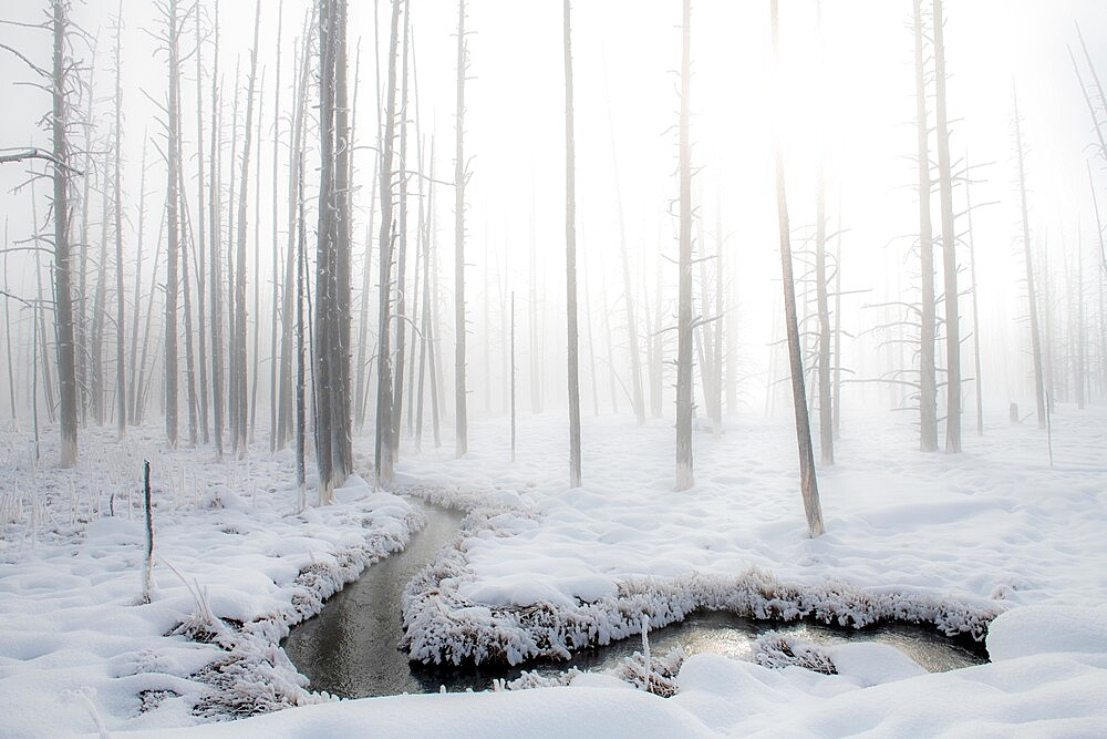 Snowscape with stream and trees in the fog, Yellowstone National Park, Wyoming, United States - 1335-134