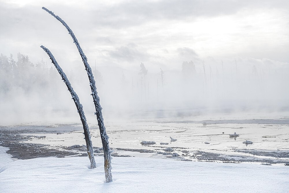 Dead trees in a snowscape with fog, Yellowstone National Park, Wyoming, United States - 1335-141