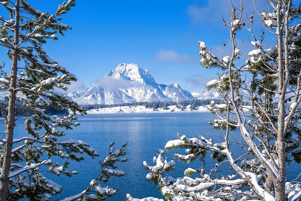 Mount Moran framed by snow covered trees, Grand Teton National Park, Wyoming, United States - 1335-59