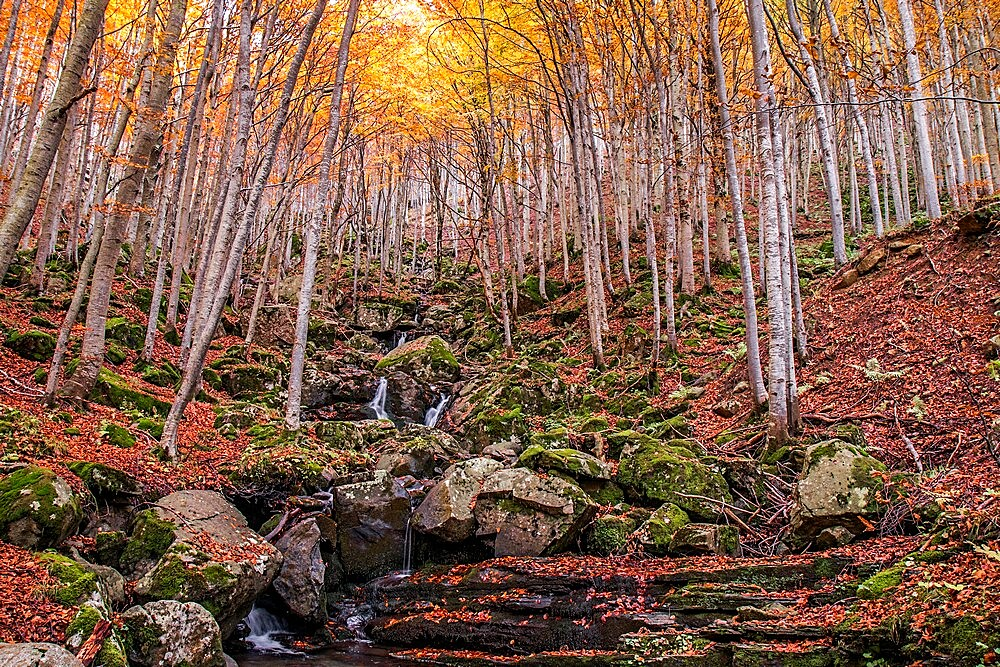 Foliage colors in the wood, Parco regionale del Corno alle Scale, Emilia Romagna, Italy