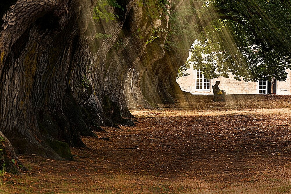 A person sitting peacefully in a tree-lined alley with sun rays filtering through leaves, Noirlac Abbey, France - 1336-53