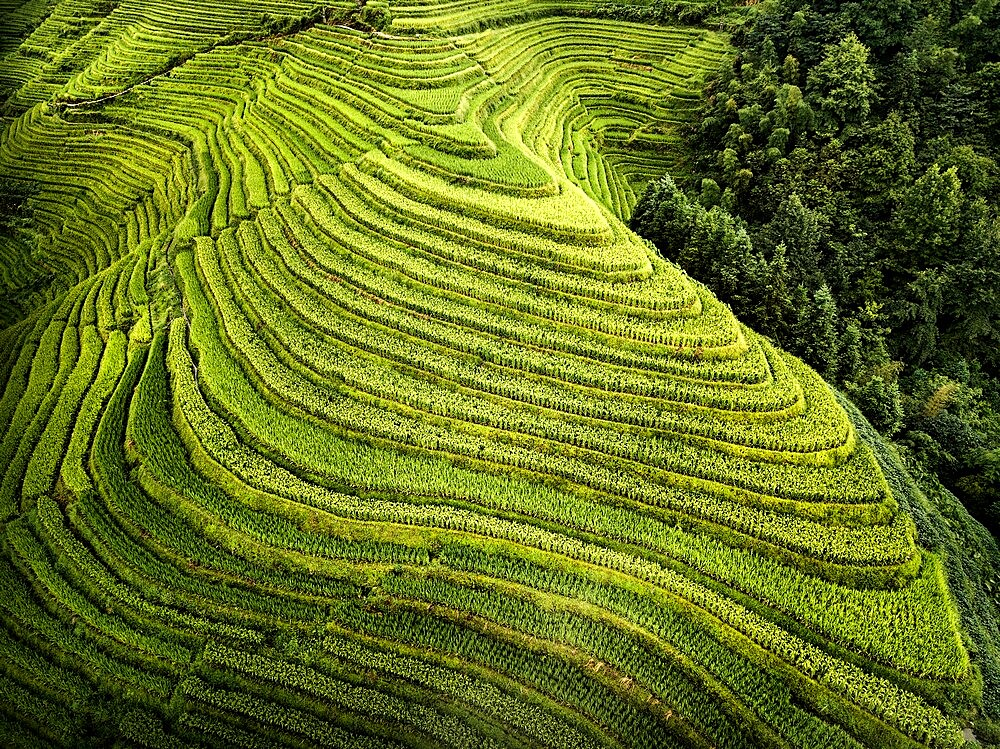 Aerial view on Longsheng rice terraces, also knows as dragon's backbone due to their shape, Guangxi, China - 1336-78