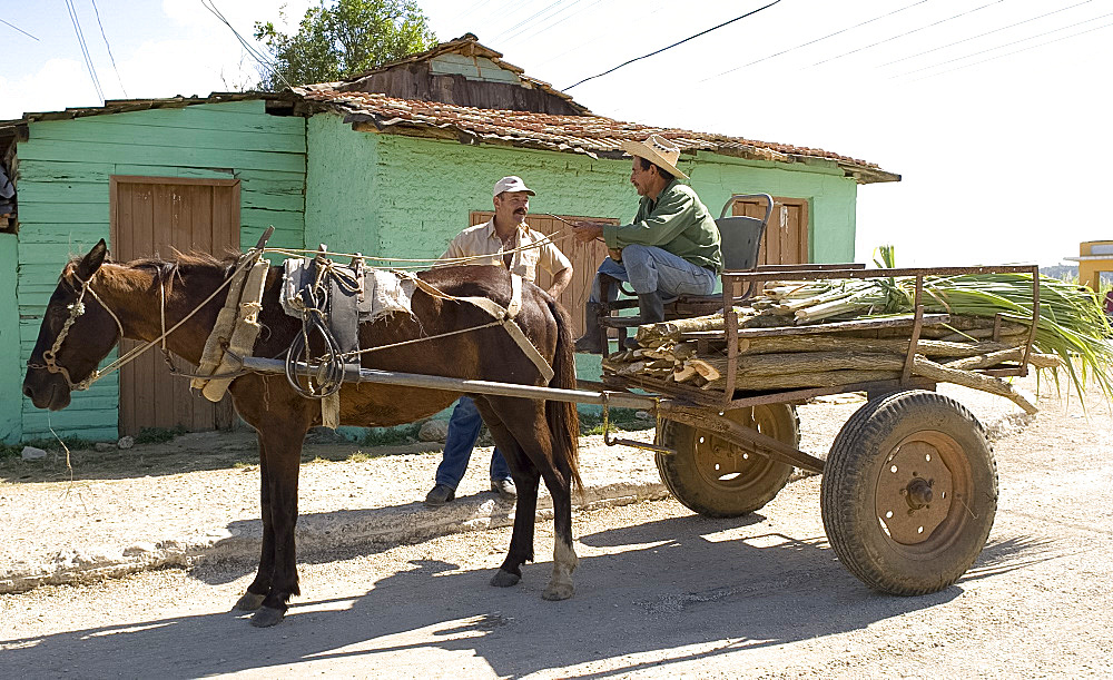 Two men and a horsecart carrying sugar cane in the Valle de Ingenios, central Cuba, West Indies, Central America