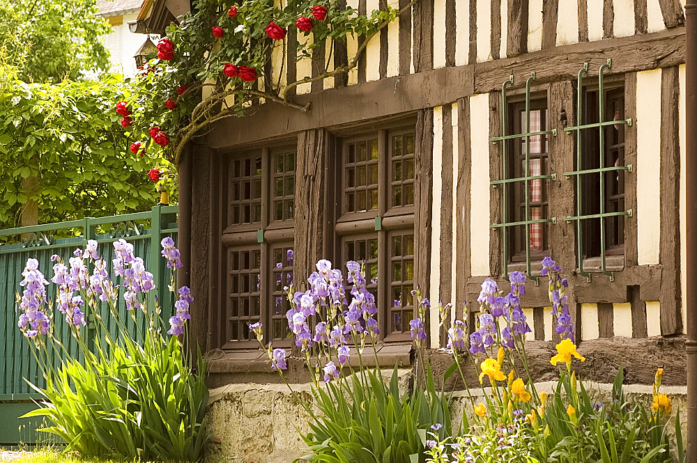 A half timbered house with irises growing in front in Blangy le Chateau, Normandy, France, Europe