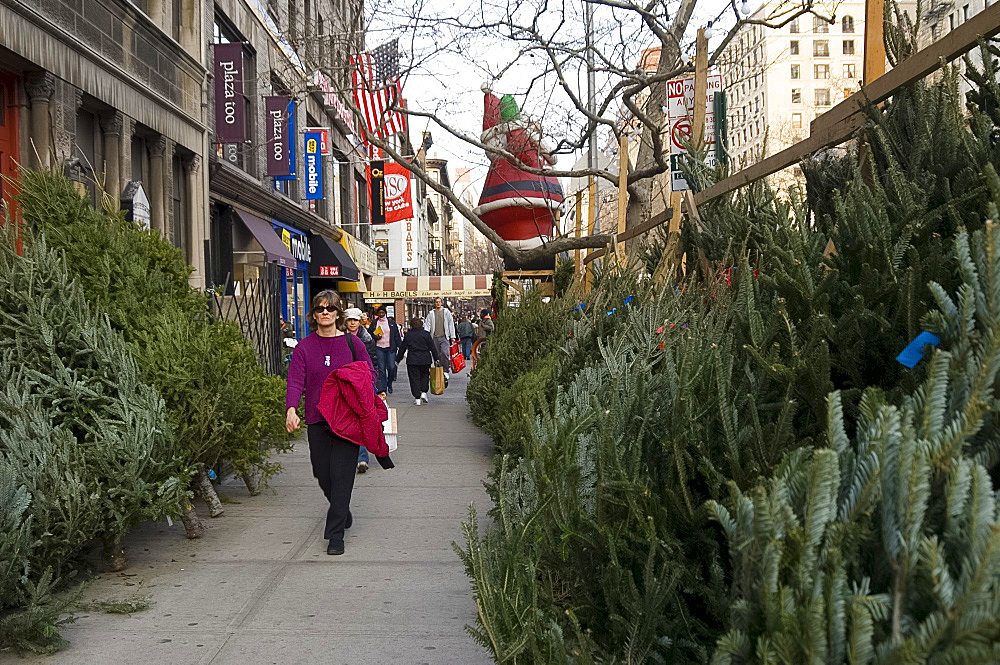Rows of Christmas trees for sale along Broadway on the Upper West Side of Manhattan, New York City, United States of America, North America