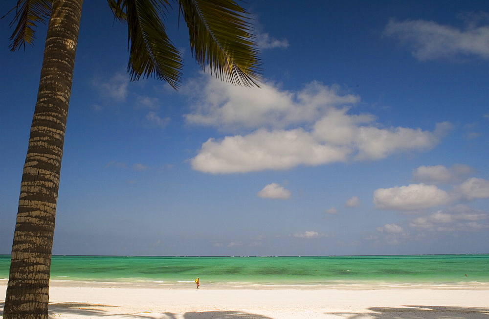 A palm tree over the beach at Paje, Zanzibar, Tanzania, East Africa, Africa