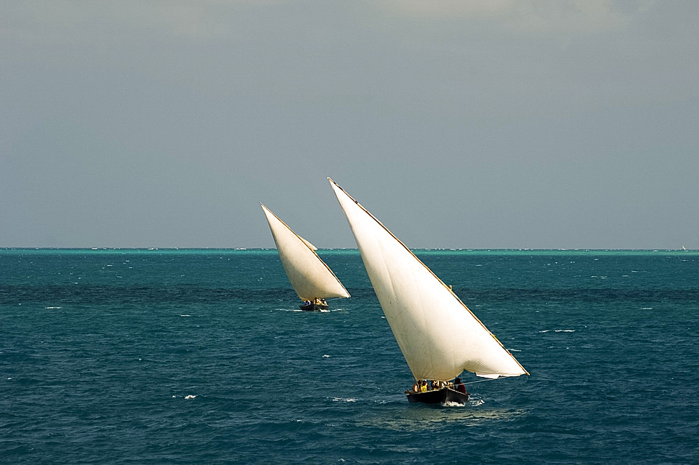 Cargo dhows sailing toward Stone Town harbour, Zanzibar, Tanzania, East Africa, Africa