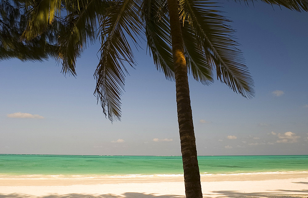 A palm tree over a white sand beach and emerald sea, Paje, Zanzibar, Tanzania, East Africa, Africa