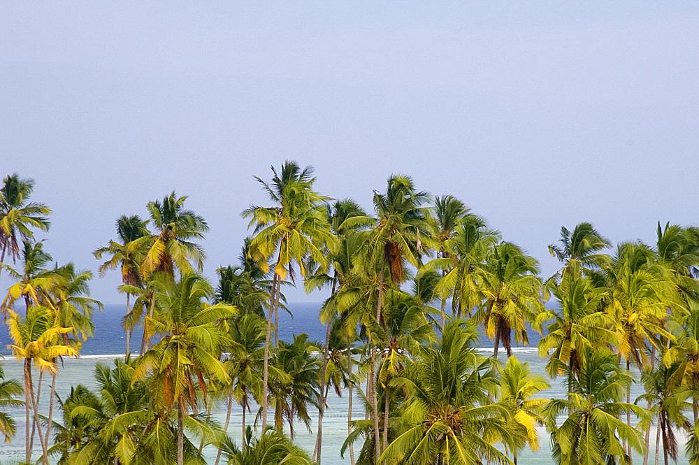 Palm trees and sea at Matemwe, Zanzibar, Tanzania, East Africa, Africa
