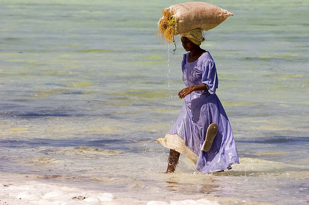 A woman in colourful dress carrying a bag of harvested seaweed on her head, Paje, Zanzibar, Tanzania, East Africa, Africa - 149-5560