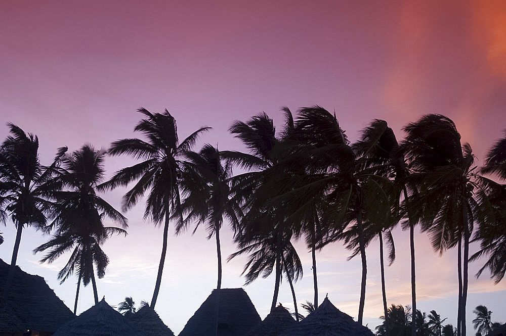 Palm trees and traditional thatched roofs in silhouette at sunset, Paje, Zanzibar, Tanzania, East Africa, Africa