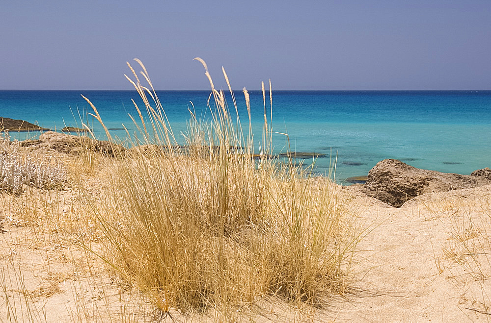 Beach grass growing in sand dunes along the beach at Phalassarna (Falassarna) on the western coast of Crete, Greek Islands, Greece, Europe
