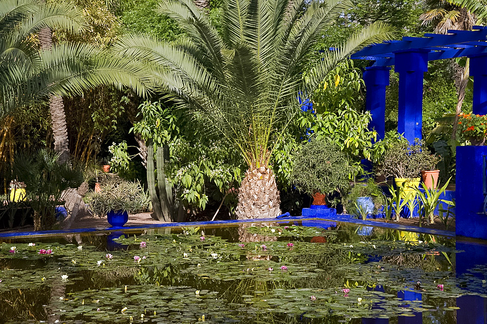 Tropical palms surrounding an ornamental pond containing water lilies at the Majorelle Garden in Marrakech, Morocco, North Africa, Africa