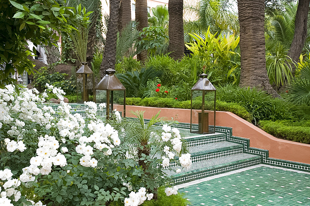 White roses and palm trees in the garden at La Mamounia Hotel in Marrakech, Morocco, North Africa, Africa