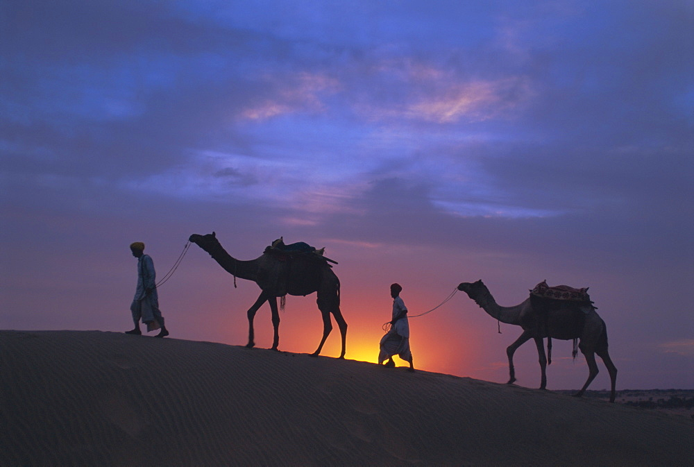 Camels silhouetted against the sunset, Thar Desert, near Jaisalmer, Rajasthan State, India, Asia