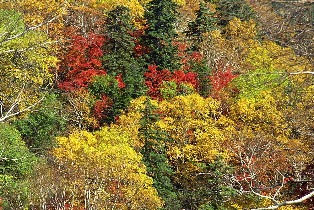 Fall foliage, Hokkaido, Japan, Asia