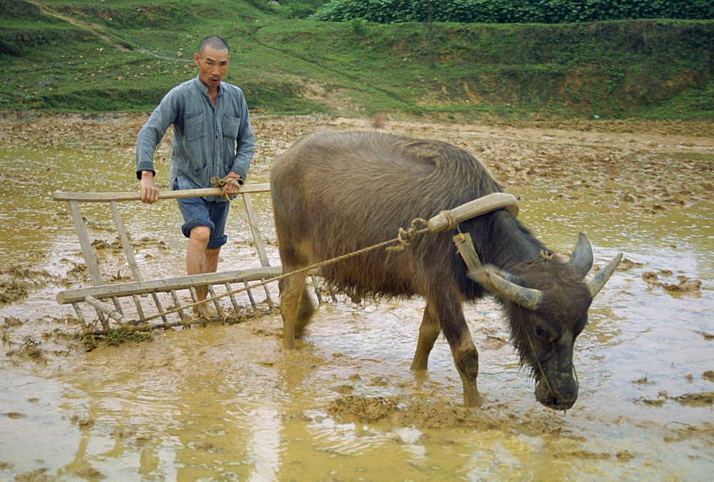 Farmer with bullock plough in flooded field at Guilin, China, Asia