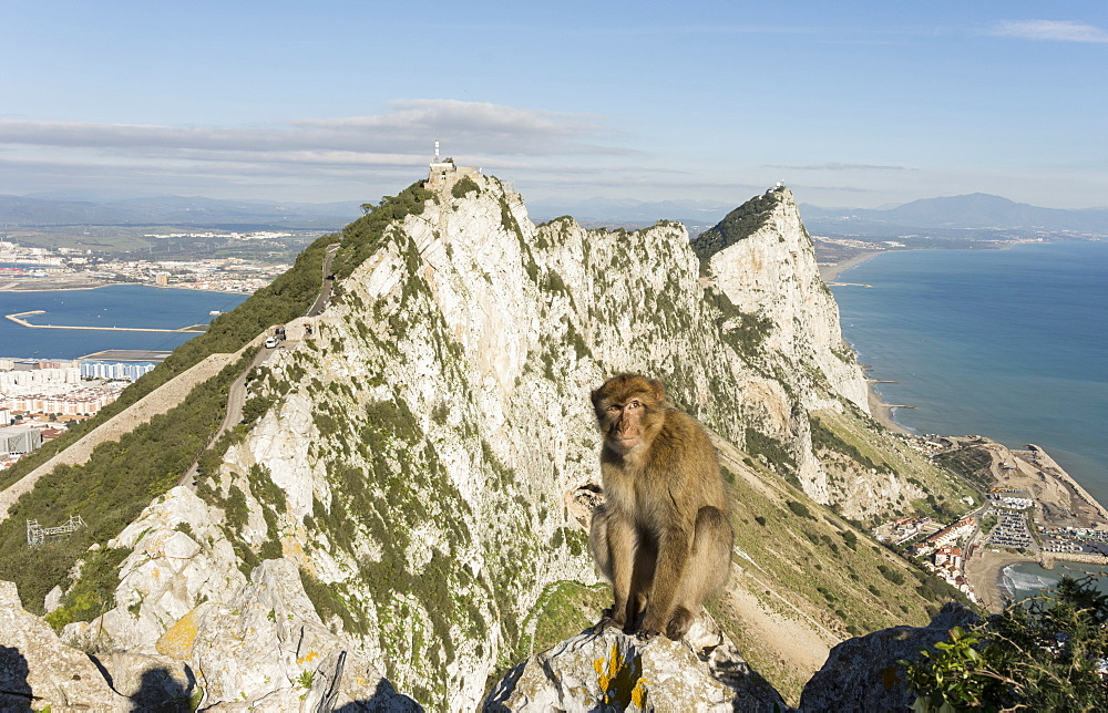 Resident Barbary macaque, with view north along the Rock behind him, Gibraltar, Europe - 29-5456