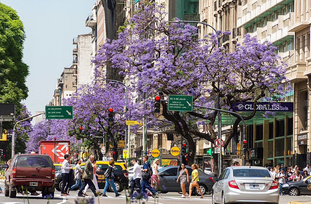 Jacaranda trees along Avenue 6 de Julio, Buenos Aires, Argentina, South America