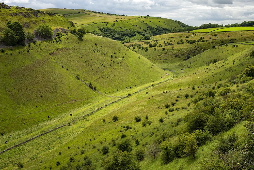 Cressbrook Dale, near Bakewell, Derbyshire, England, United Kingdom, Europe - 29-5610