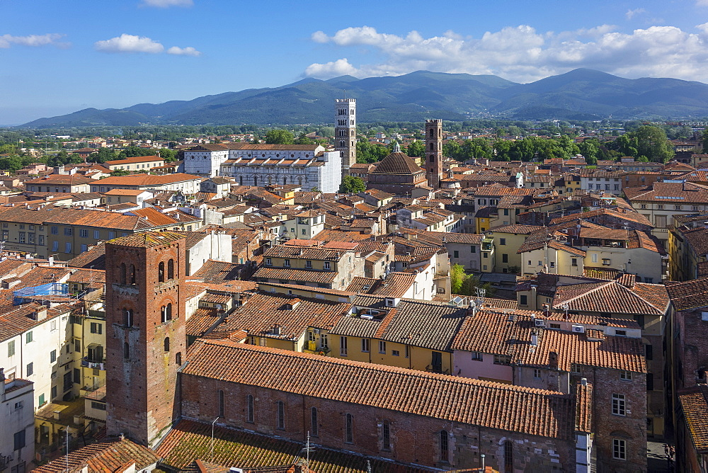 Aerial view of Lucca, Tuscany, Italy, Europe - 306-4461
