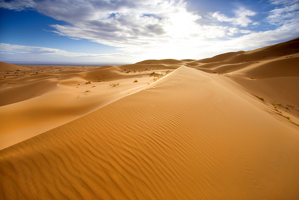 Rolling orange sand dunes and sand ripples in the Erg Chebbi sand sea near Merzouga, Morocco, North Africa, Africa