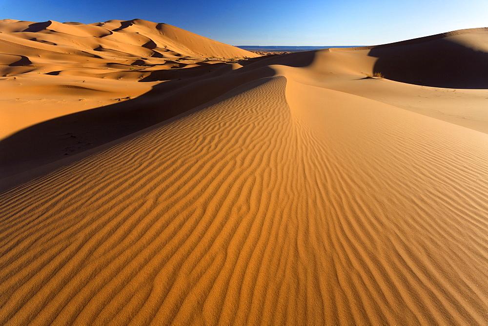 Orange sand dunes and sand ripples, Erg Chebbi sand sea, Sahara Desert near Merzouga, Morocco, North Africa, Africa