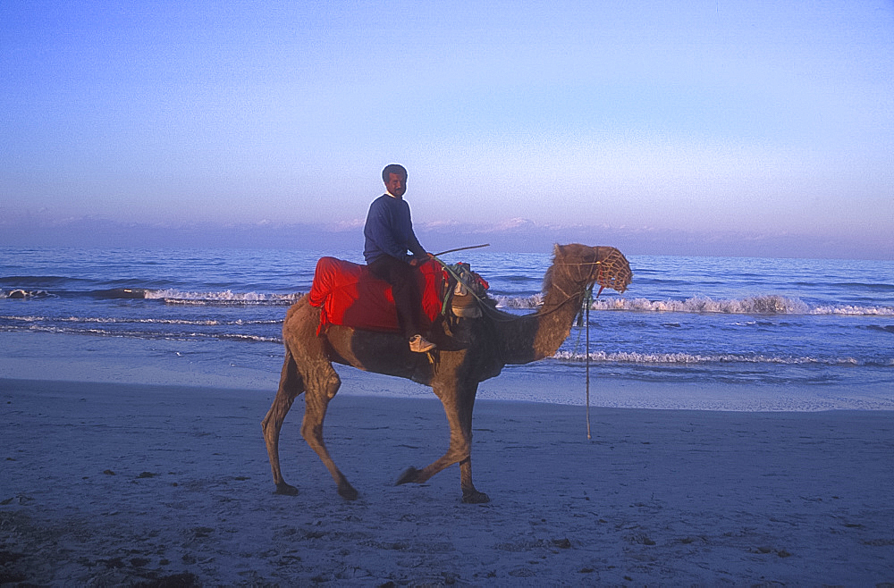 Camel rider on beach, Djerba, Tunisia. *** Local Caption ***