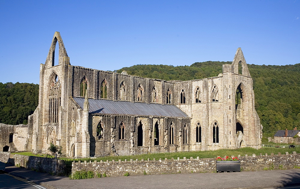 Late afternoon view of South and West sides of Tintern Abbey, Monmouthshire, Wales, United Kingdom, Europe